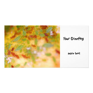 Aphids Photo Greeting Card