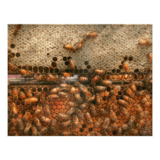 Apiary - Bee's - Sweet success Flyers