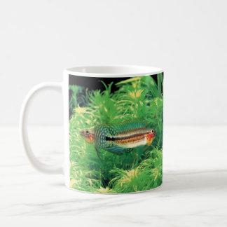 "Apistgramma sp. The magnetic cup ""of Miua"" Basic White Mug"