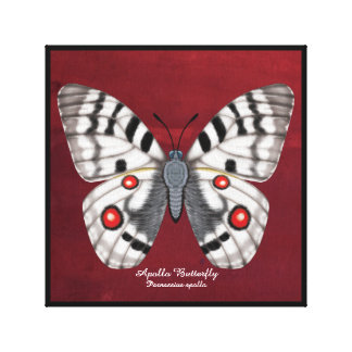Apollo Butterfly Canvas Print