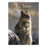 Apology Nature Greeting Card