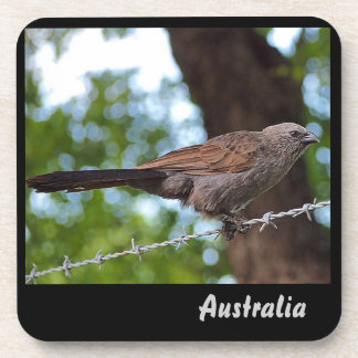 Apostlebird on barb wire drink coaster set