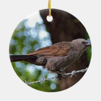 Apostlebird on barb wire ornament