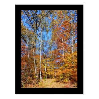 Appalachian Trail Autumn, Fall Scenery Postcard