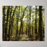 Appalachian Trail in October at Shenandoah Poster