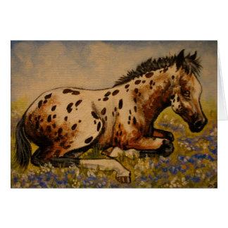 Appaloosa foal card