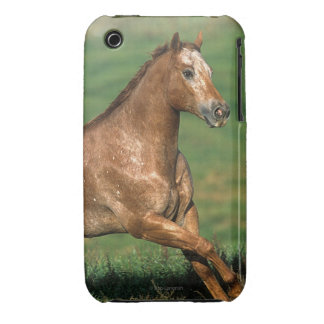 Appaloosa Horse Running in Grassy Field iPhone 3 Case