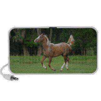 Appaloosa Horse Running iPhone Speakers