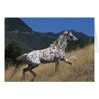 Appaloosa Horse Running up Mountain Card