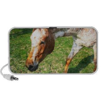 Appaloosa Horse Speakers
