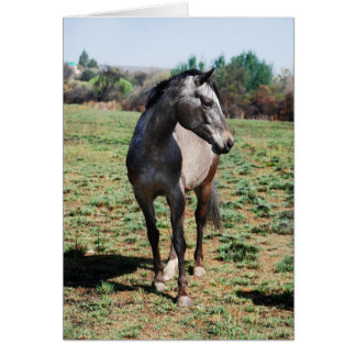 Appaloosa horses card