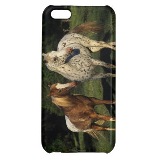 Appaloosa Horses Case For iPhone 5C