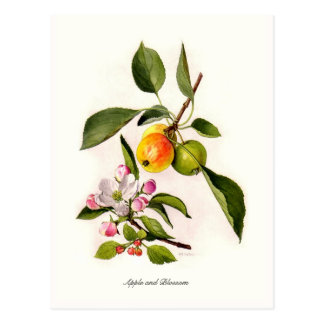 Apple and Blossom Post Card
