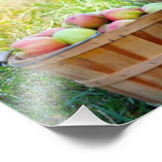 Apple Baskets Photo Print
