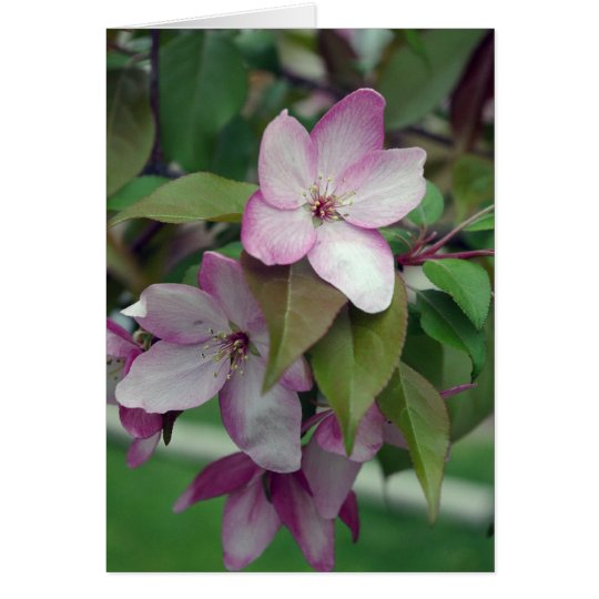 Apple Blossom Birthday Card