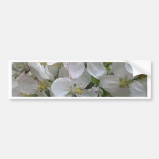 Apple Blossom Bumper Sticker Car Bumper Sticker