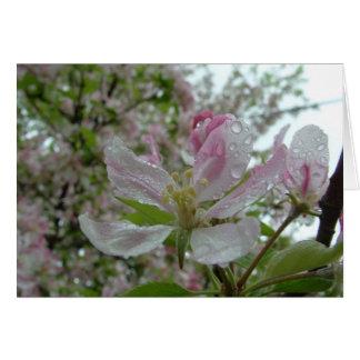 Apple Blossom Card