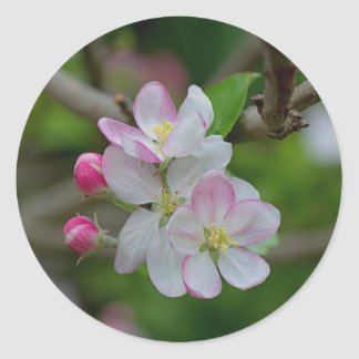 Apple Blossom Classic Round Sticker