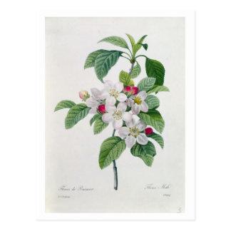 Apple Blossom, from 'Les Choix des Plus Belles Postcard