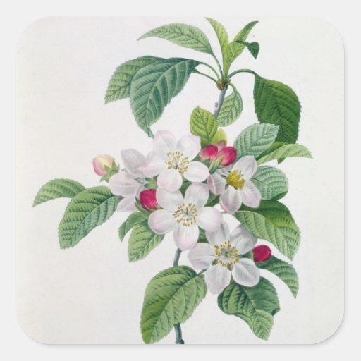 Apple Blossom, from 'Les Choix des Plus Belles Square Sticker