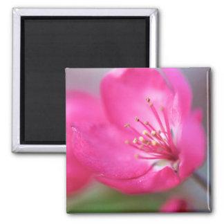Apple Blossom Magnet