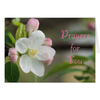 Apple Blossom Prayer card- or any occasion Greeting Card