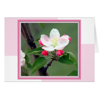 Apple Blossom Spring Note Card
