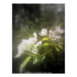 apple blossoms #2, focal black and white poster