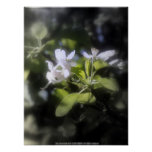 apple blossoms #6 poster
