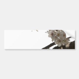 Apple Blossoms Bumper Sticker