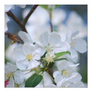 Apple Blossoms 13 Cm X 13 Cm Square Invitation Card