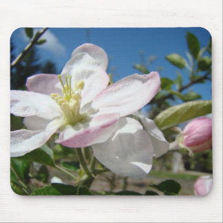 Apple BLOSSOMS MOUSEPADS Pink Blossoms Mousepad