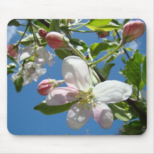 APPLE BLOSSOMS MOUSEPADS Tree Blossoms Mousepad