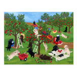 Apple Farm Labradors