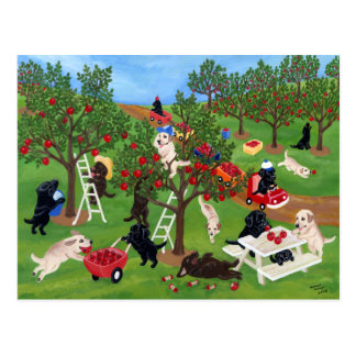 Apple Farm Labradors Postcard