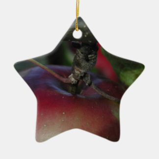 Apple Hanging From a Branch Ceramic Star Decoration
