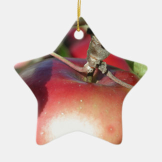 Apple in a Tree Close-up Ceramic Star Decoration
