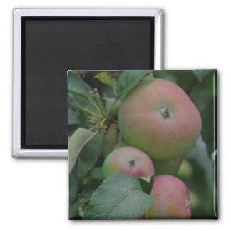 Apple - kitchen magnet