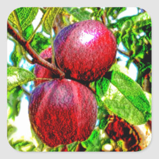 Apple Of My Eye Color Drawing Square Sticker