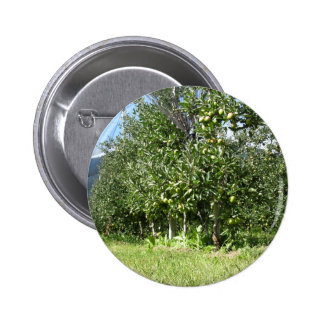 Apple orchard with protection nets 6 cm round badge