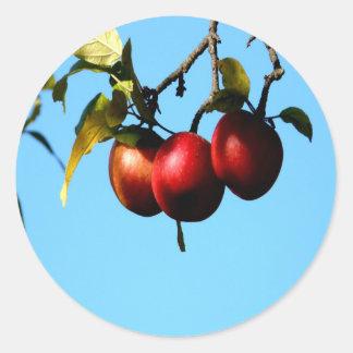 apple success harvest autumn round sticker