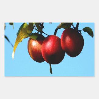 apple success harvest autumn rectangular stickers