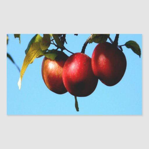 apple success harvest autumn rectangular stickers