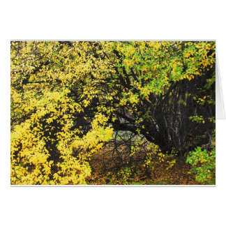 Apple Tree Autumn Card