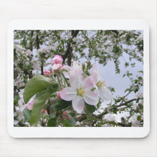 apple-tree blossom mouse mat