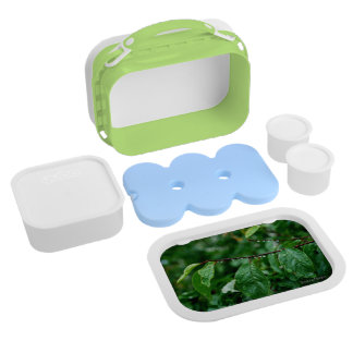 """Apple Tree"" lunch box for healthy gourmets."