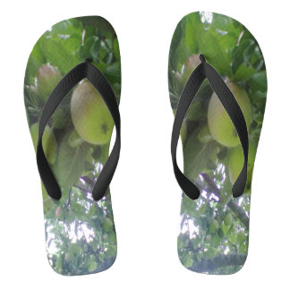 apple tree photo flip flops