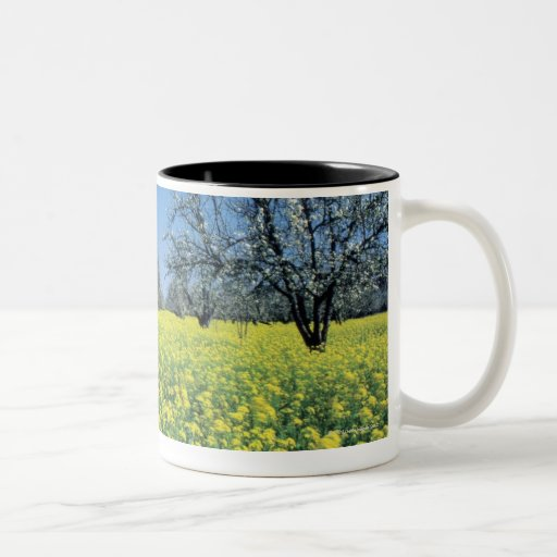 Apple trees in a mustard field, Napa Valley, Two-Tone Mug