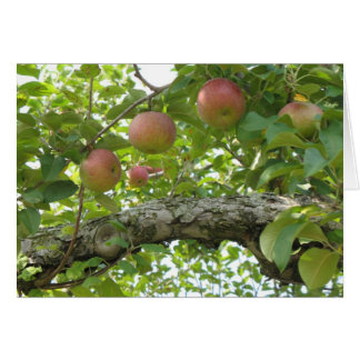 Apples Hanging On The Tree Greeting Card