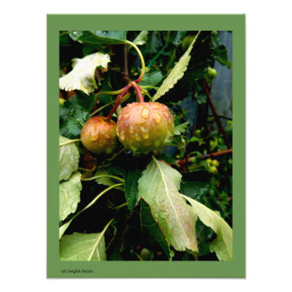 Apples in the Fall Photo Print